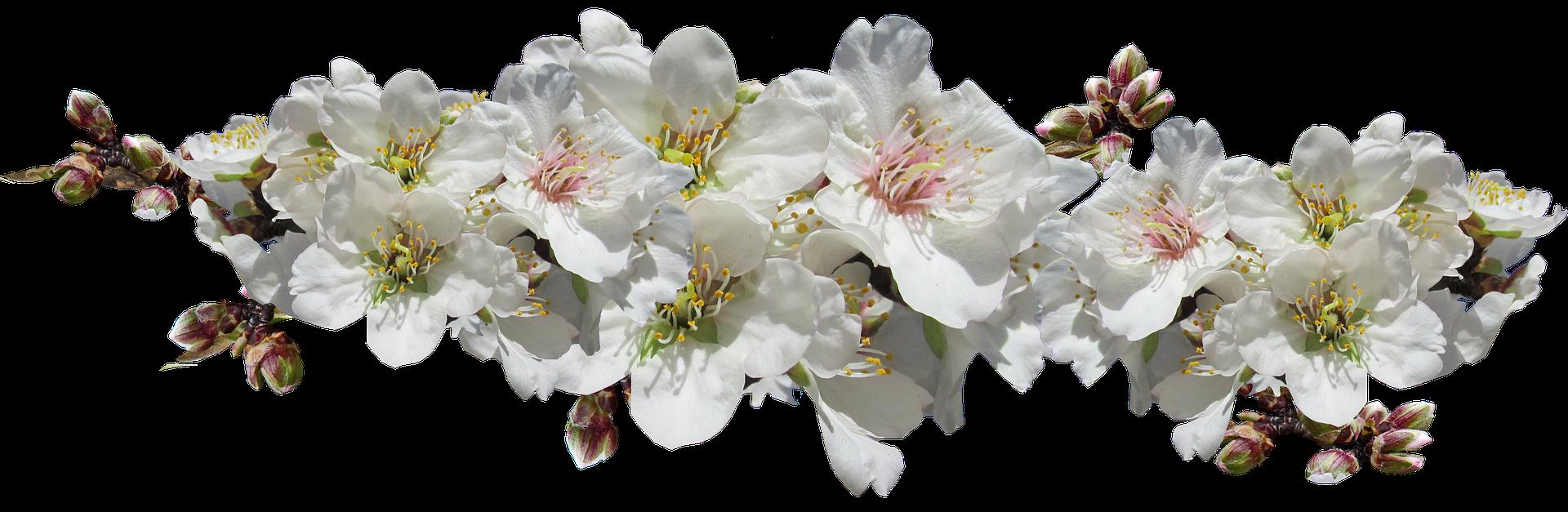 flowers-4507585_1920